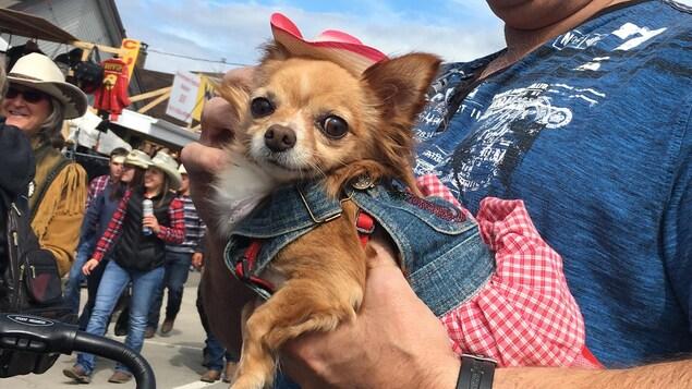 Chien avec un chapeau de cowboy au festival le 8 septembre 2017