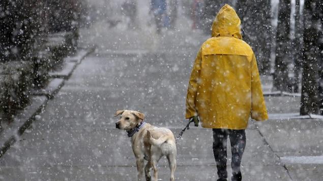 Un individu promène son chien dans une tempête de neige printanière.