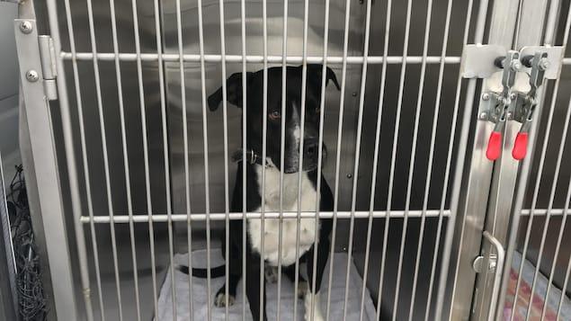 Un chien est dans une cage.