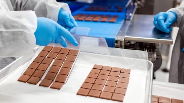 Des employés mettent des carrés de chocolat au cannabis dans des boîtes.