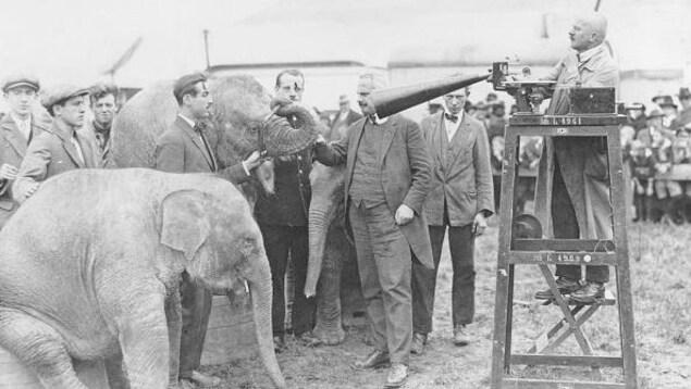 Photo date de 1932 - Des éléphants sont placés sur des caisses en bois. Un homme monté sur une chaise en bois enregistre le barrissement des animaux avec une sorte d'entonnoir relié à un microsillon.