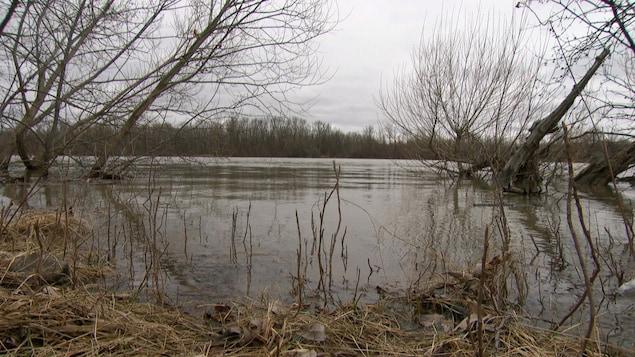 La rivière des Outaouais pendant la crue printanière de 2019.