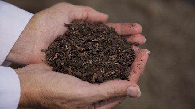 Deux mains ouvertes, contenant des copeaux de bois et de la terre.