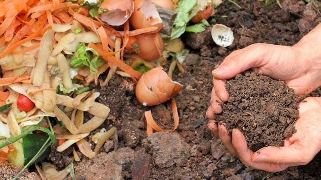 Un homme tient du compost dans ses mains.
