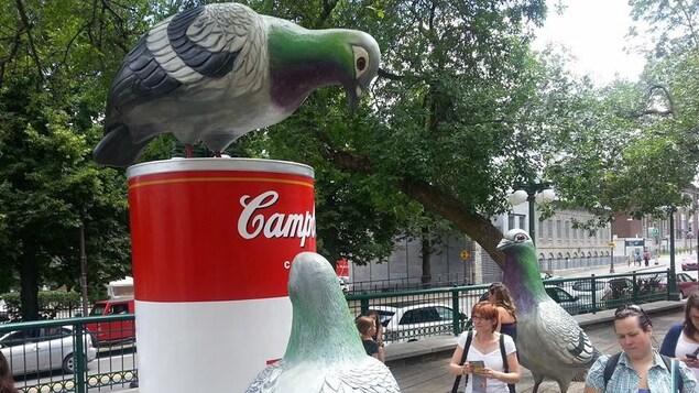 Les pigeons de Cooke-Sasseville. D'énormes pigeons et une énorme soupe cCmpbell.