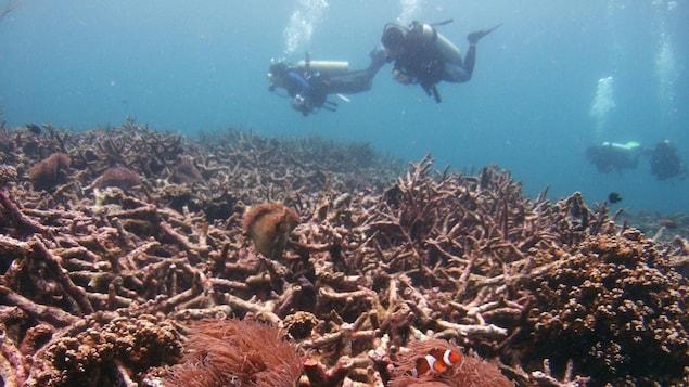 Des plongeurs nagent au-dessus d'un lit de coraux morts