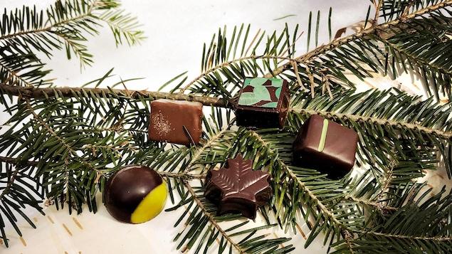 Chocolat sur des branches de sapin