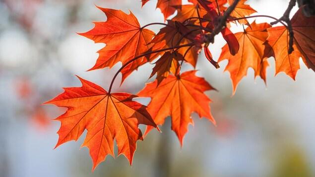 Des feuilles aux couleurs oranges sur une branche d'arbre