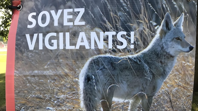 Une affiche montrant un coyote, à côté duquel il est écrit « Soyez vigilants! »