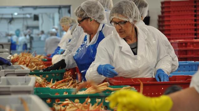 Des travailleuses et travailleurs d'usine travaillent à la chaîne afin d'apprêter le crabe.