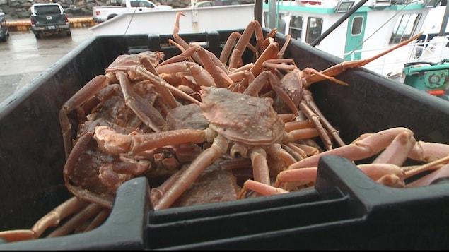 Crabes fraîchement pêchés dans un bac.
