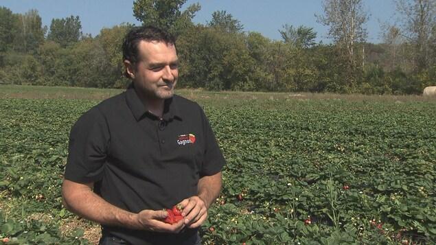 Homme dans un champs de fraises