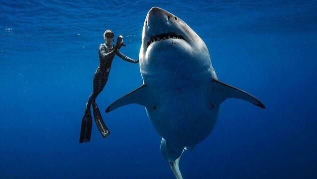 Deep Blue et l'une des plongeuses.