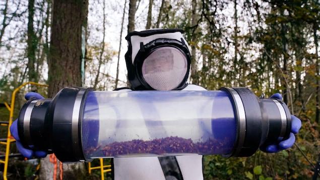 Un homme tient un récipient transparent dans lequel on peut voir des frelons.