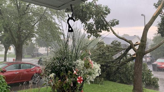 Un arbre avec deux grosses branches d'arbre tombées, on voit qu'il y a beaucoup de pluie, dans un secteur résidentiel.
