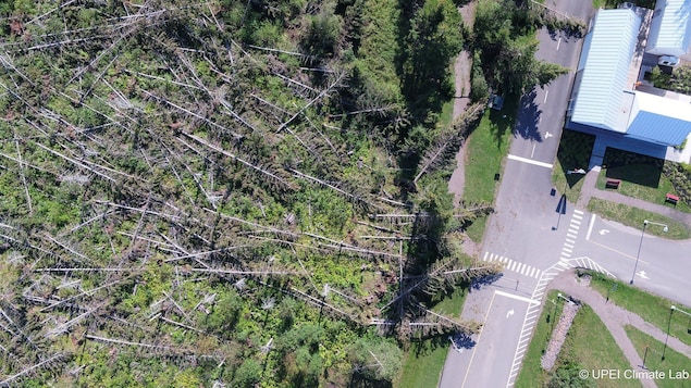 Sur cette image aérienne, on peut constater les dommages qu'a causés la tempête Dorian sur cette forêt de l'Île-du-Prince-Édouard.