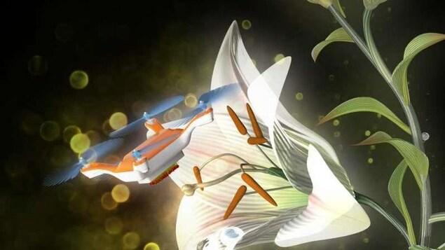 Image du drone pollinisateur