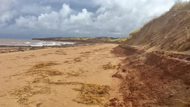Les dunes de la plage Cavendish.