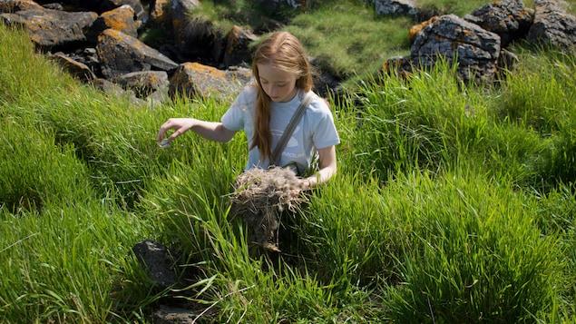 Une fille tient un nid d'eider dans ses mains au mileu de hautes herbes et de roches.