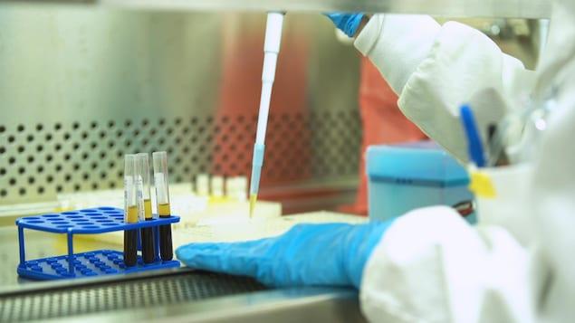Échantillons de sang dans les laboratoires de l'hôpital Sainte-Justine, à Montréal.