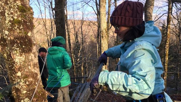 Une des étudiantes du programme, Sonia Létourneau, installe des tubulures, des tuyaux qui acheminent l'eau d'érable dans l'érablière.