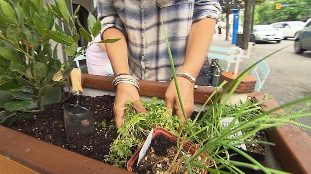 Une femme plonge ses mains dans la terre pour planter des fines herbes dans un bac près de la terrasse d'un restaurant.
