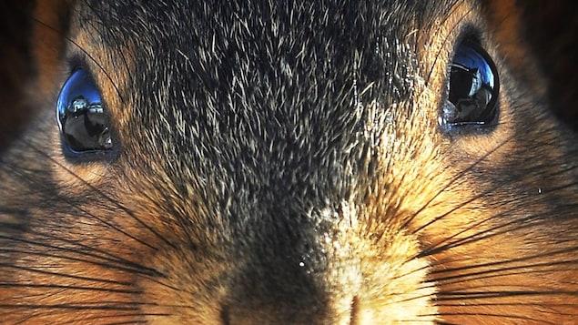La Ville de Winnipeg ordonne à une résidente du quartier St. James de se débarrasser d'une mangeoire pour oiseaux dans sa cour, car pour les autorités municipales, l'objet sert à nourrir les écureuils.