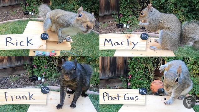 Montage de quatre photos montrant des écureuils en train de manger de la nourriture sur du bois.