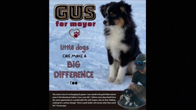 L'affiche de campagne du chien Gus.