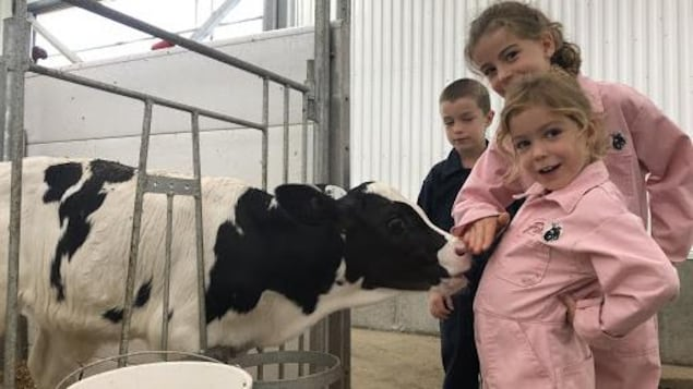 Les enfants de Maxime Béliveau en compagnie d'une des 85 vaches de la ferme familiale.