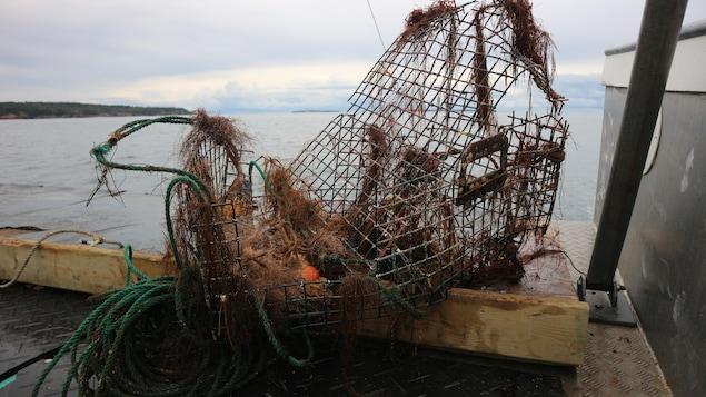 Des cages et casiers de pêche rouillés déposés sur un quai après avoir été récupérés.