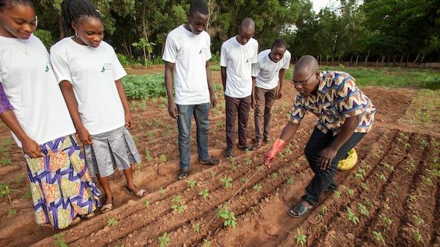 Le chercheur Pierre Irenikatche Akponikpe enseigne à de jeunes scientifiques la manière appropriée de creuser de petites dépressions dans le sol afin d'appliquer des microdoses d'engrais à des plants d'amarante.