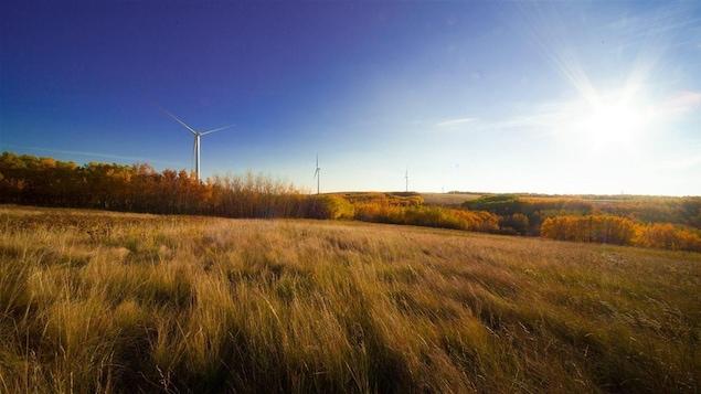 Un parc éolien sur un paysage de prairies