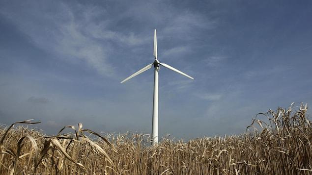 20 millions $ pour les éoliennes d'Anse-Bleue : Bathurst refuse de s'expliquer - ICI.Radio-Canada.ca