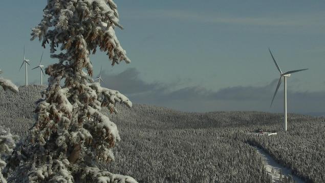 Des éoliennes dans un paysage hivernal