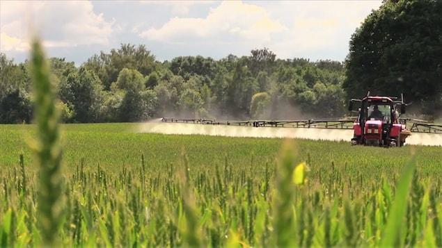 Un tracteur épand du glyphosate sur un champ de blé.