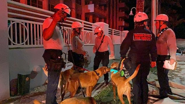 Des chiens de sauvetage avec leurs maîtres-chiens s'apprêtent à faire des recherches.