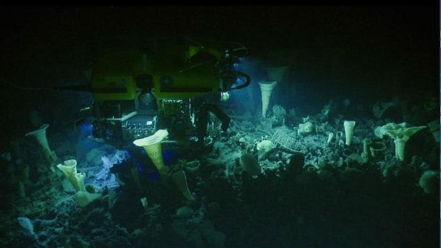 Un robot explore une forêt de coraux et d'éponges dans les profondeurs de la mer.