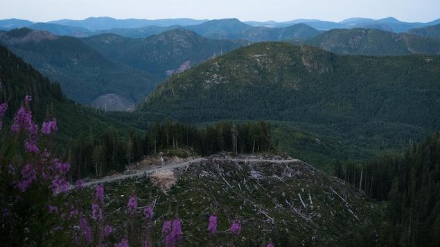 Le bassin versant de Fairy Creek avec une partie des arbres coupée.
