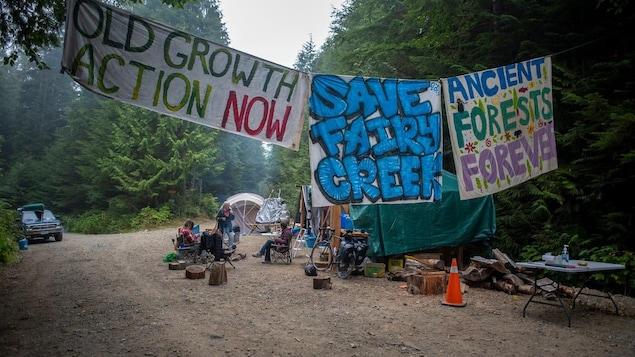 Des manifestants bloquent l'accès à une forêt d'arbres anciens.
