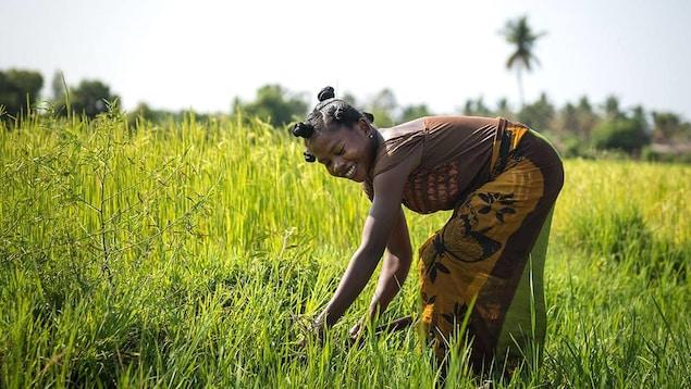 Une femme noire souriante qui travaille dans un champ.
