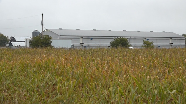 On voit un vaste bâtiment de ferme de couleur grise, au loin. Au premier plan, un champ en culture.