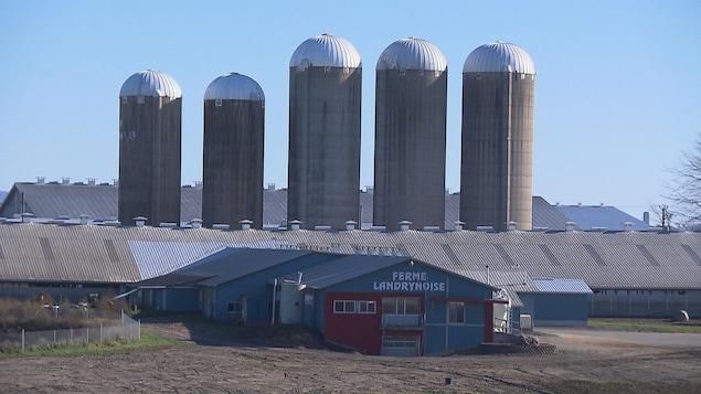 Les cinq silos de la ferme Landrynoise derrière le bâtiment principal.