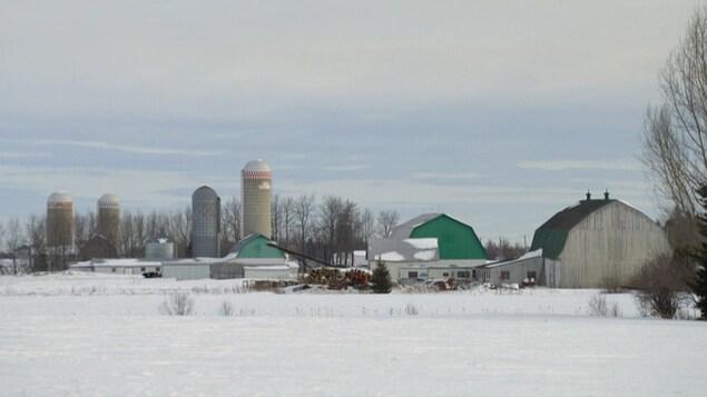 Un champ et des bâtiments de ferme.