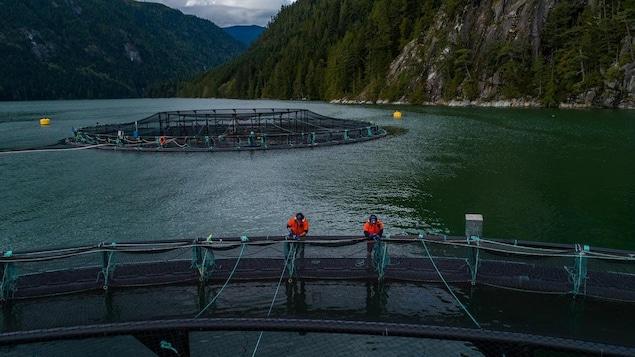 Deux personnes sur l'armature retenant un filet qui emprisonne les saumons en mer observent l'élevage.
