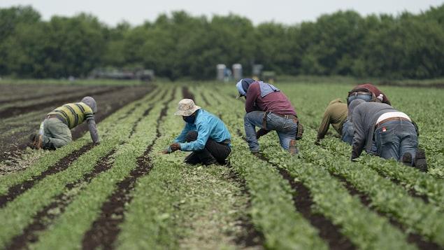 Des travailleurs accroupis dans un champ.