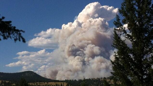 Une colonne de fumée s'élève au-dessus des arbres.