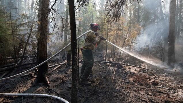 Un pompier arrose des arbres dans la forêt.