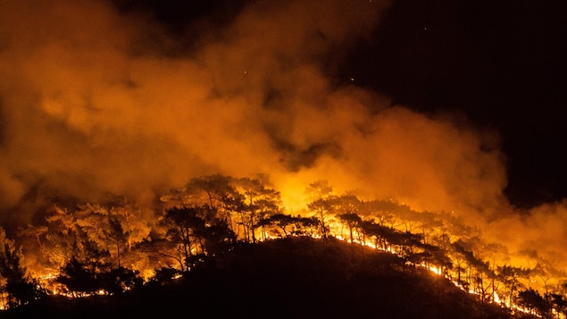 Un feu de forêt, la nuit.