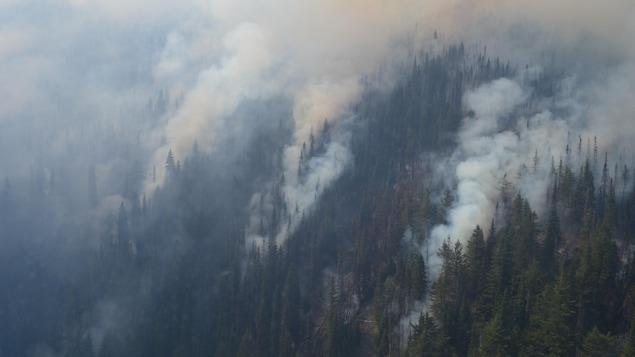 دخان يتصاعد من غابة.